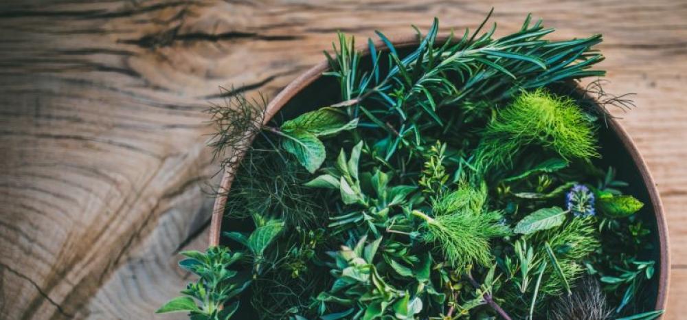 Ervas: o que são, como consumi-las e benefícios